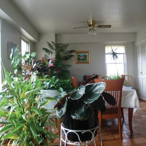 The Fairmount Apartments For Rent in Elizabeth, NJ Dining Room